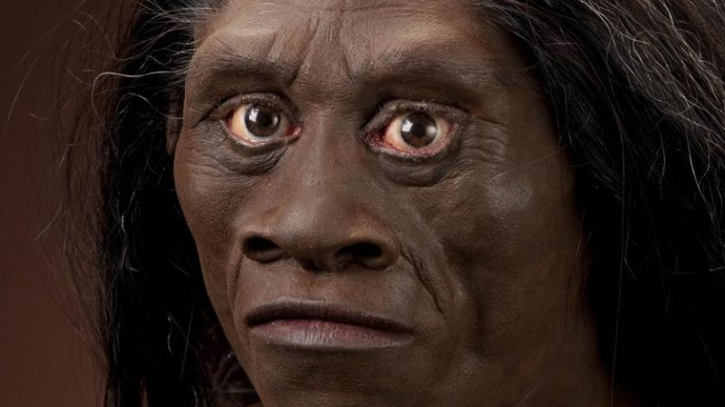 The Notion of Homo Floresiensis
