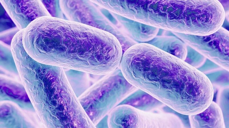 Do baceria in your gut have an impact on mental health?