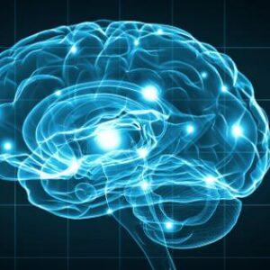 Brain Explain: The Lobes Of Life